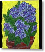 Hydrangea In A Pot Metal Print