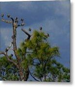 Ibis In The Pines - Debbie May Metal Print