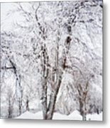 Ice Covered Trees One Painted Metal Print