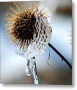 Ice On Burdox Metal Print