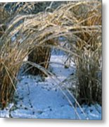 Iced Ornamental Grass Metal Print