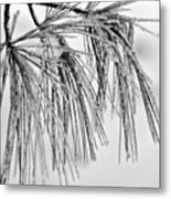 Icy Pines On A Snowy Day Metal Print