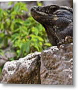 Iguana At Talum Ruins Mexico 2 Metal Print
