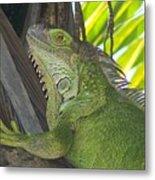Iguana Puerto Rico Metal Print