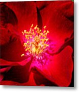 Illumination Metal Print