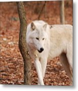 I'm A Wolf Metal Print