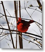 I'm Feeling Rather Red Today Metal Print