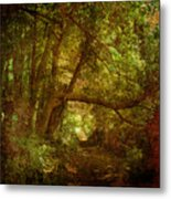In A Forest Metal Print
