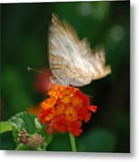 In Living Color Metal Print