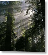 In The California Redwood Forest Metal Print