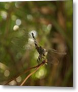 In The Forest There Are Dragons Metal Print