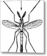 Insect: Midge Metal Print