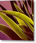 Iris Art Metal Print