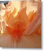 Iris Flower Art Prints Sunlit Orange Irises Baslee Troutman Metal Print