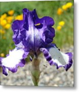 Iris Flower Purple White Irises Nature Landscape Giclee Art Prints Baslee Troutman Metal Print