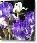 Iris Flowers Floral Art Prints Purple Irises Baslee Troutman Metal Print