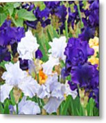 Irises Flowers Garden Botanical Art Prints Baslee Troutman Metal Print