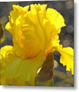 Irises Yellow Iris Flowers Art Prints Floral Canvas Baslee Troutman Metal Print