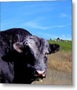 Its A Bulls Life Metal Print by Wingsdomain Art and Photography