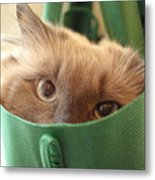 Jack In The Bag Metal Print