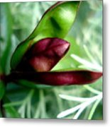 Jack In The Pulpit 4 Metal Print