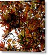Japanese Maple 2011-1 Metal Print