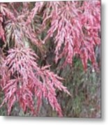 Japanese Maple In The Rain Metal Print