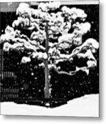 Japanese Tree In The Snow Metal Print by Dean Harte