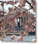 Jefferson Through The Cherry Blossoms Metal Print