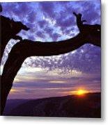 Jeffrey Pine Sentinel Dome Metal Print