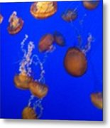 Jelly Fish 2 Metal Print