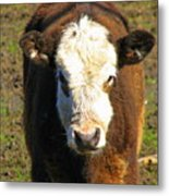 Just A Cow Metal Print