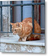 Just Curious Cat Metal Print