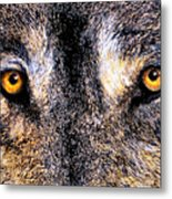 Just Watching Wolf Metal Print