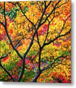 Kaleidoscope Of Autumn Color Metal Print