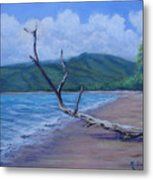 Kihei Beach Tree Metal Print