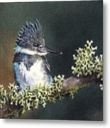 Kingfisher II Metal Print