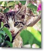 Kitten Hiding Out Metal Print