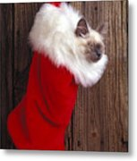 Kitten In Stocking Metal Print by Garry Gay