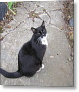 Kitty Kitty Kitty Metal Print