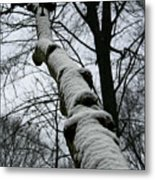 Knoted Metal Print