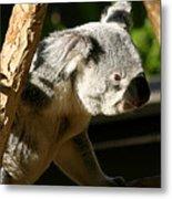 Koala Bear 2 Metal Print