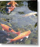 Koi In Pond II Metal Print