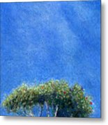 Kokee Trees Metal Print