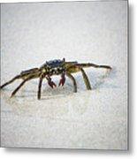 Kua Bay Crab 1 Metal Print