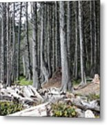 La Push Beach Trees Metal Print