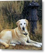 Lab And Fire Hydrant Metal Print