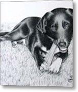 Labrador Samy Metal Print
