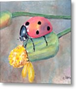 Lady Bug - Lady Bug... Metal Print