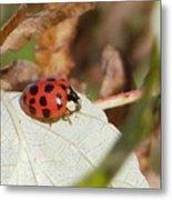 Lady Bug Metal Print